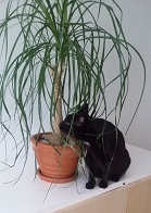 Kylään tullut musta kissa tutustuu pullojukkaan.