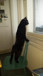 Musta väri korostaa kissaeläimen sulavia linjoja.