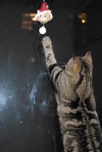 Joulukoriste ei ole turvassa kissoilta edes ikkunan yläreunaan hilattuna.