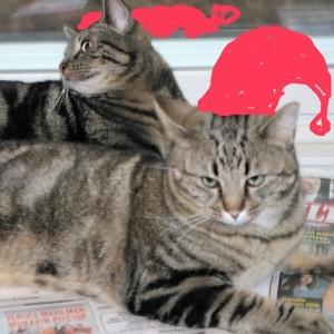 Hyvää joulua meiltä teille!