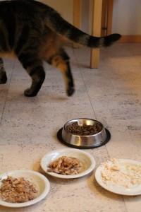 Kissa ei pidä ruosta ja ilmaisee mielipiteensä poistumalla paikalta.