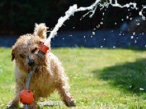 Koira on leikkisä ja sosiaalinen eläin kuten me itse.