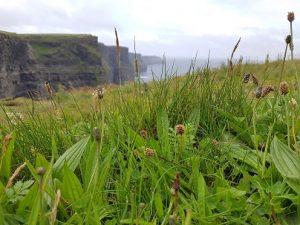 Cliffs of Moherin kunnioitusta herättävät äkkijyrkät kalliot Irlannin länsirannalla.