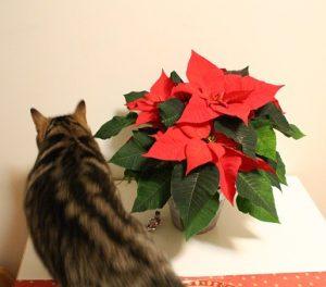 Utelias kissapeto tulee tarkastamaan vihreän tulokkaan.